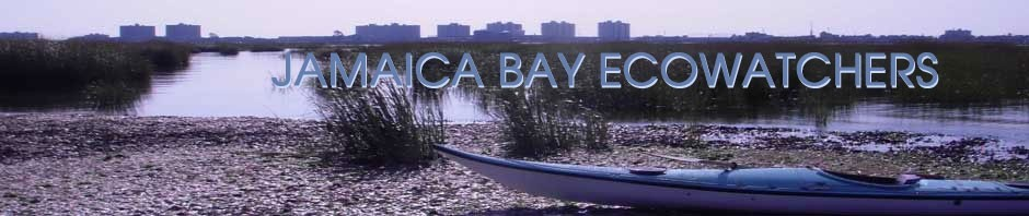 Jamaica Bay Ecowatchers
